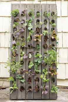 Plant Wall Ideas for unusual planting