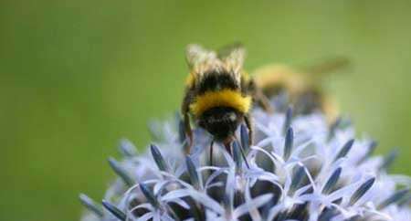 Avoid harmful chemicals and encourage bees into your garden