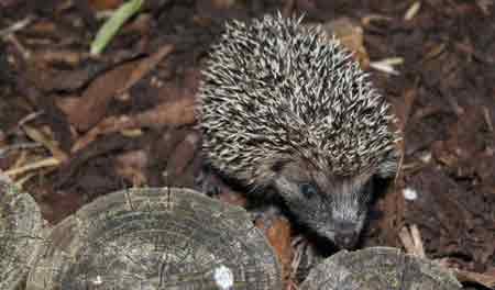 Wildlife gardening encourages bees, moths, birds and hedgehogs