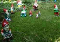 gnomes Gnomes are like Marmite