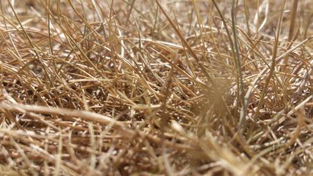 Heatwave makes the lawn brown