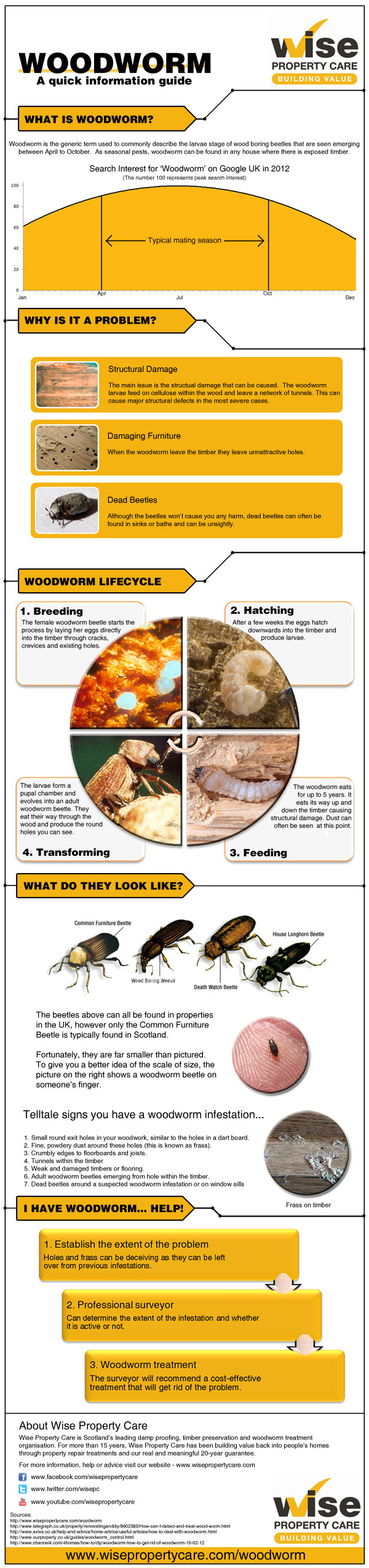 woodworm infographic small Woodworm is Active in the Summer