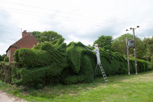 Dragon Hedge Topiary