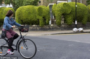 Tim Bushe Elephant Hedge
