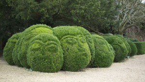 Gurning Heads Hedge