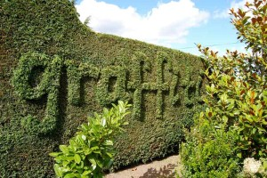 Graffiti Hedge by Knives Out