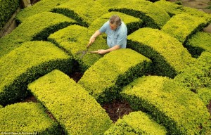 Knot Garden Hedge