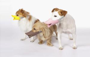 Quack - Beak Muzzle for Dogs
