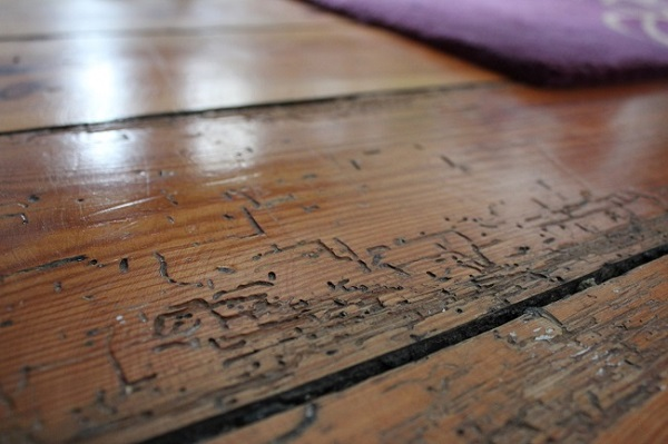 Do you find Woodworm Boring?