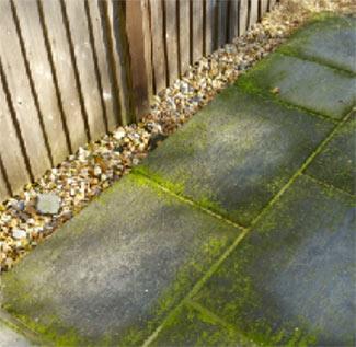 Lichen and Algae covered patio