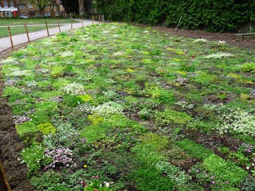 Grass Free Lawns – What are They and how can I Grow one?