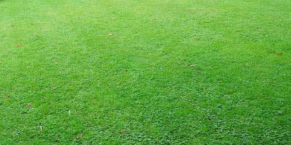 What Nutrients Should you use for a Healthy Lawn?