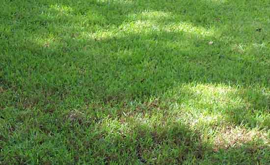 What you Need to Know to Grow a Lawn in the Shade