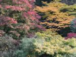 Are you Ready for Autumn – Autumn Checklist for Home and Garden