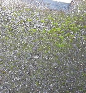 moss-growth1.jpg