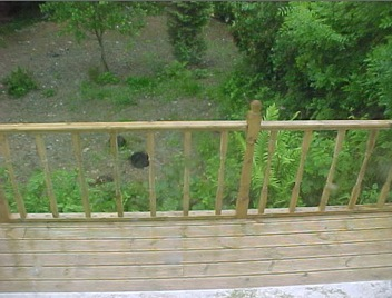 BEECHBROOK DECKING FIRST.jpg