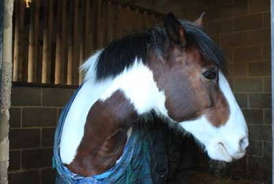 Horse in stable at Deen City Farm