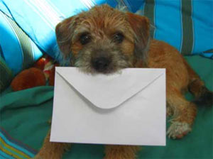 Dog carrying envelope