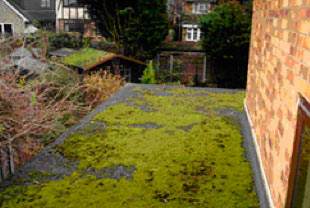 Flat roof chippings gathering moss