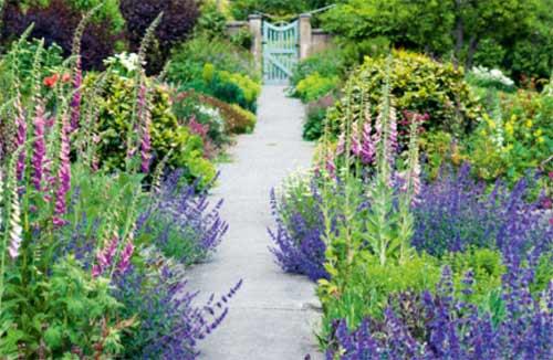 Concrete garden path in a cottage garden