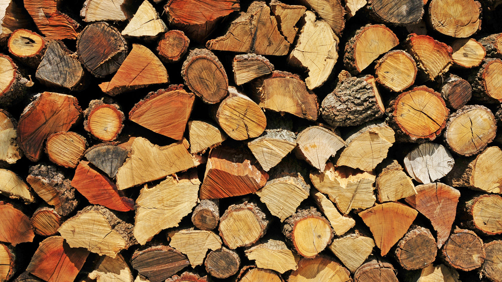 Hardwoods and softwoods find out about the different