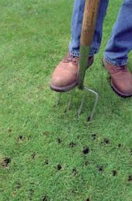Aerating lawn with fork