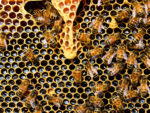 Making a Beehive