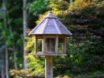 Bird garden with bird feeder