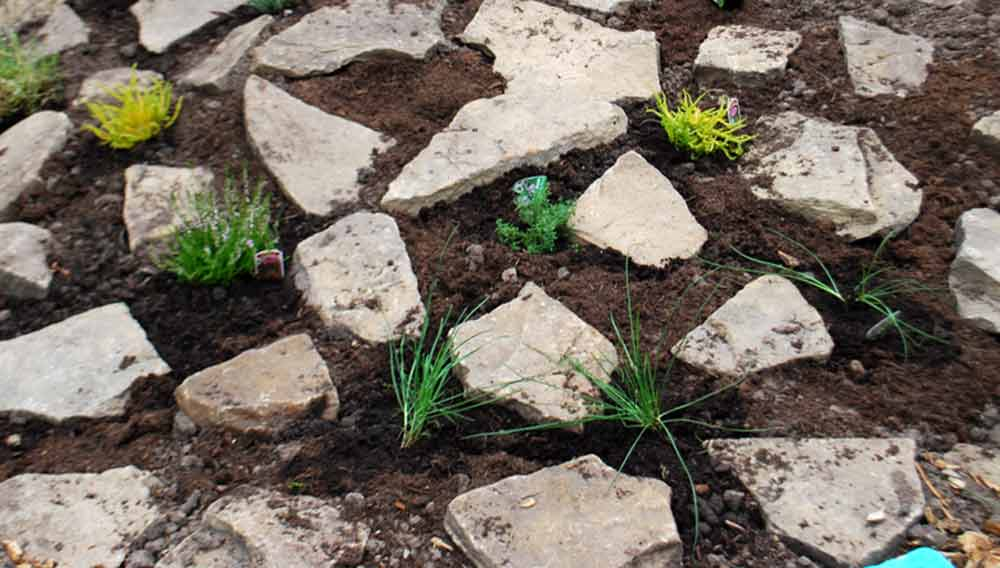 How To Build A Rockery Garden And What Plant In It Diy