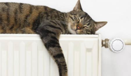 Cat asleep on top of radiator