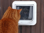 Fitting a Cat Flap