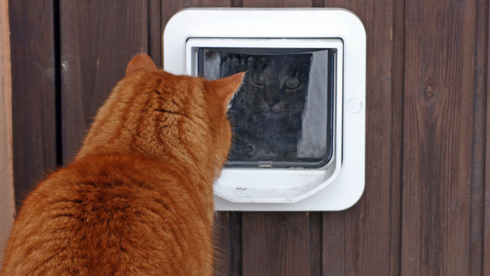 Fitting A Cat Flap How To Fit A Cat Flap Into A Timber Or Upvc