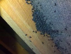 Cluster flies in loft