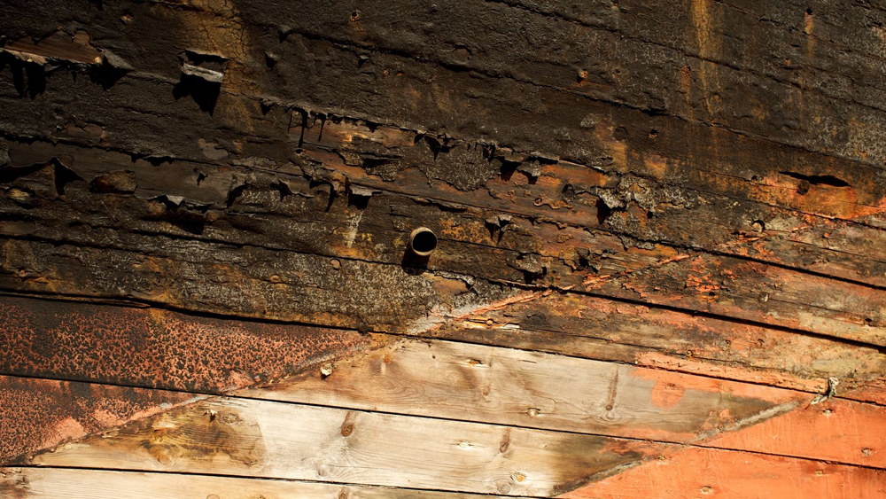 Dry Rot And Wet Rot Pictures For Detection And Diagnosis Including
