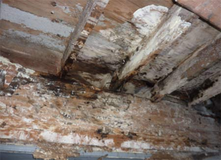 Mould growth on timber