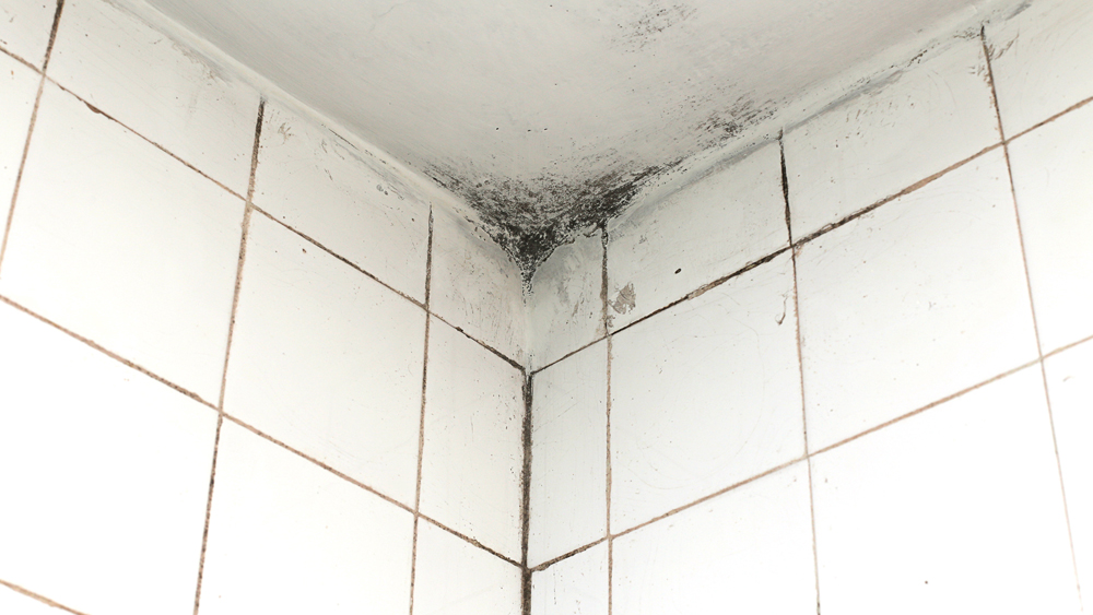 Black mould on bathroom ceilings and walls black mould - Cleaning mold off bathroom walls ...