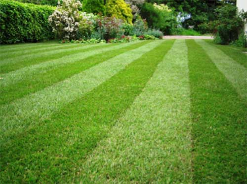 Perfect lawn and grass
