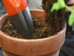 Repotting a pot plant
