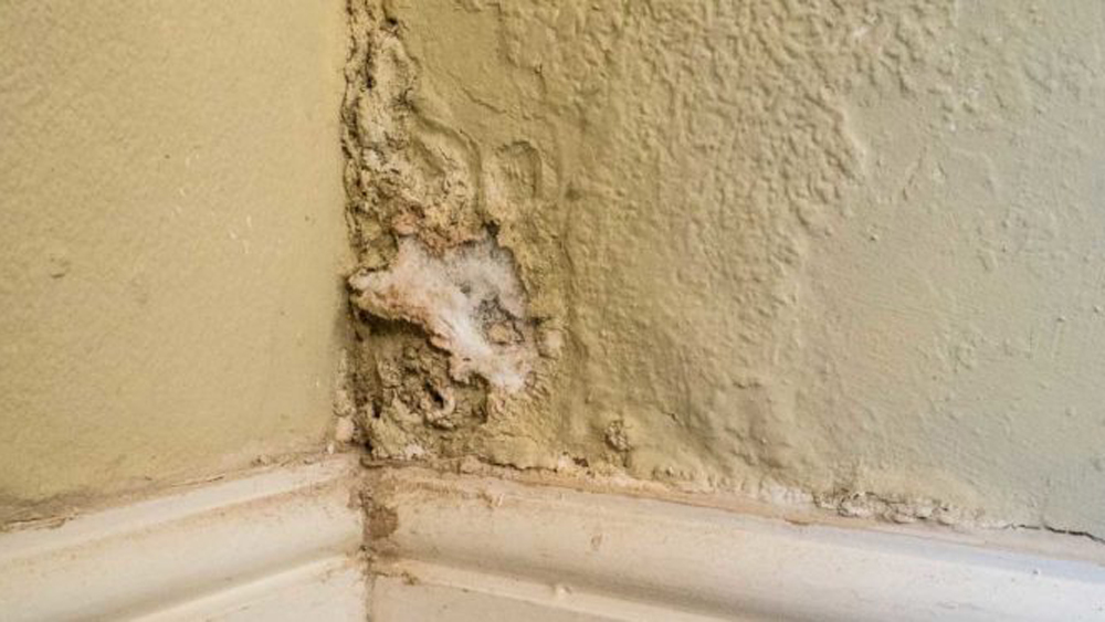 How To Treat Rising Damp What Is And Causes It Can I Get Rid Of Diy Doctor