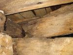 Timber Decay and Repair