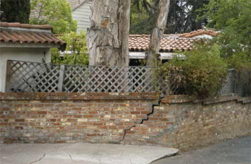 Tree damaged foundation
