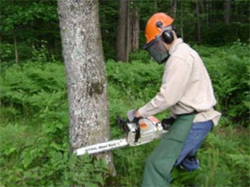 Using a chainsaw safely