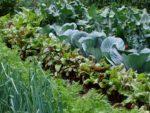 Well stocked vegetable garden