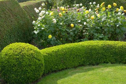 Well kept hedge