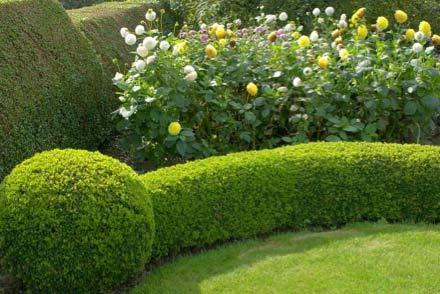 Well kept hedge