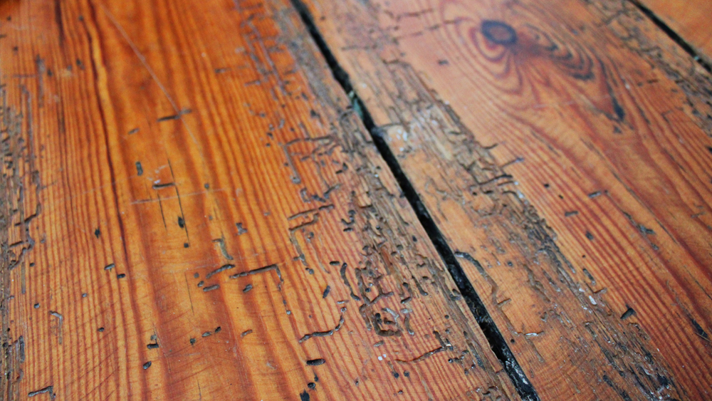 Diy Woodworm Treatment Advice And Diagnosis How To Deal