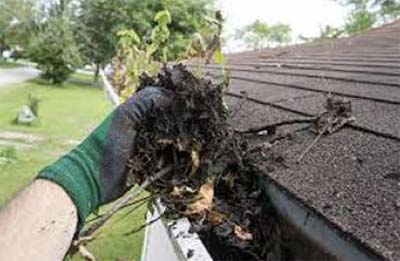 Leaf litter build-up in gutters