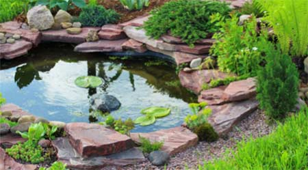 Avoid Leaves in Garden Ponds