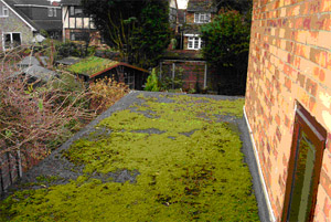 Moss covering flat roof