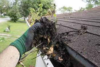 Scooping leaf matter out of gutter by hand